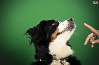 Dog Training Methods