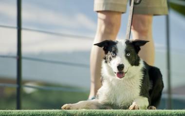Dog Training Profession